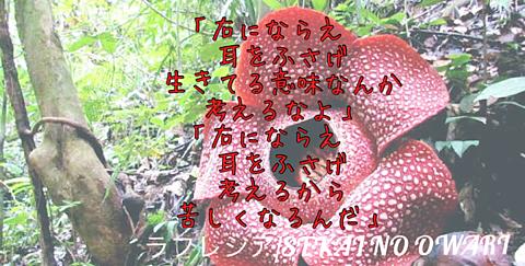 ラフレシア/SEKAI NO OWARIの画像 プリ画像