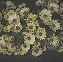 。の画像(アイコン/トプ画/ホーム画/素材に関連した画像)