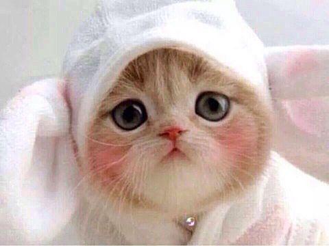癒し 猫 可愛い 45695002 完全無料画像検索のプリ画像 Bygmo