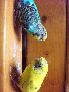 鳥さん●´∀`●の画像(プリ画像)