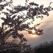 夕焼け!の画像(雲に関連した画像)