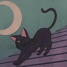 アニメの画像(猫 かわいいに関連した画像)