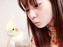 AKB48 島崎遥香の画像(プリ画像)
