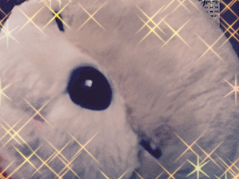 ドヤ顔(´ー`)vの画像(プリ画像)