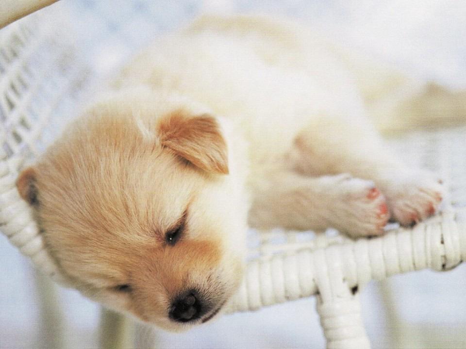椅子で眠るかわいい子犬
