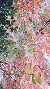 紅葉🍁 プリ画像