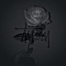 白い薔薇 プリ画像
