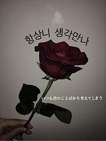 薔薇の画像(お花に関連した画像)