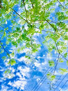 オシャレ自然の画像(自然に関連した画像)