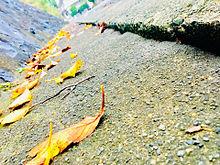 秋小人の通りみちの画像(小人に関連した画像)