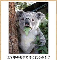動物 面白い 画像