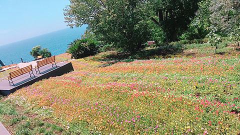 花畑の画像(プリ画像)