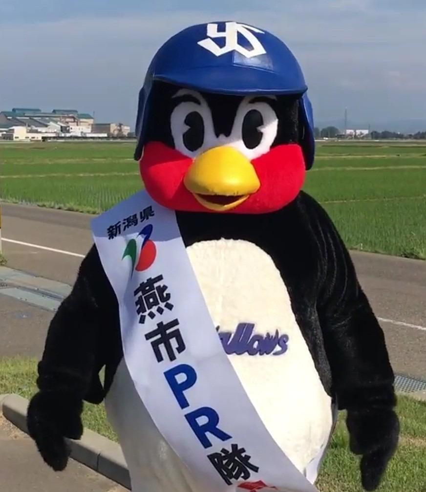 新潟のPRをしているつば九郎です。