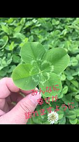 四つ葉のクローバー プリ画像