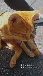 猫ちゃん プリ画像
