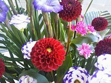 🥀花  ダリア トルコキキョウの画像(トルコに関連した画像)