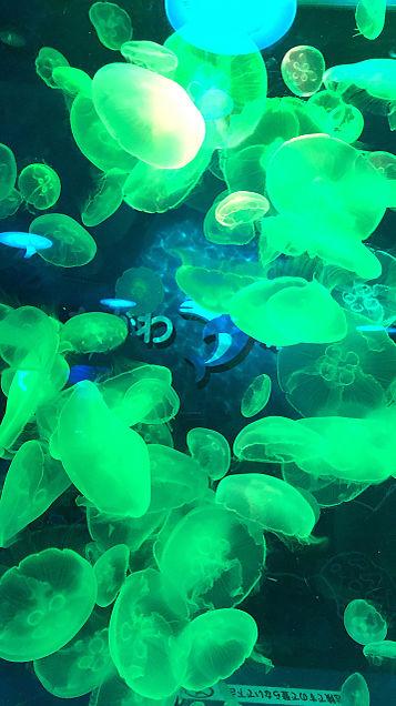 クラゲの画像(プリ画像)