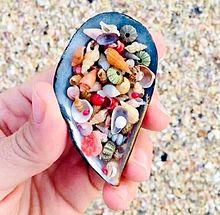 小さな貝殻  写真右下のハートを押してねの画像(貝殻に関連した画像)