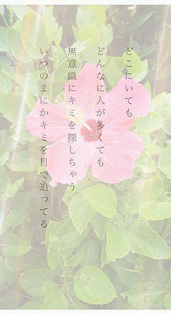 恋ポエム アレンジ ハイビスカス 光の画像(プリ画像)