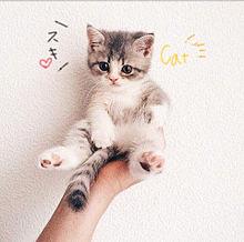 ネコの画像(プリ画像)