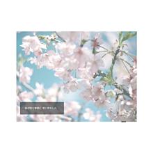 桜咲く日に プリ画像
