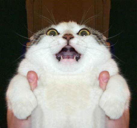 表情が面白い猫