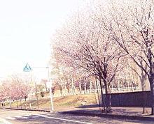 春 プリ画像