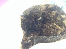 すきまにはさまっとるネコ☆の画像(プリ画像)