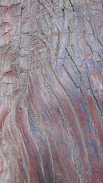 パワースポットの木の画像 プリ画像