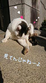 猫さん プリ画像