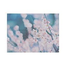 桜の詩 プリ画像