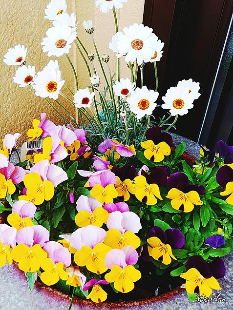 花が咲いたよの画像(プリ画像)