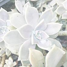 おはなPart❷の画像(お花に関連した画像)