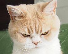 猫の画像(動物に関連した画像)