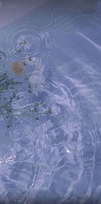 壁紙 オシャレ シンプル 花の画像(壁紙 シンプルに関連した画像)