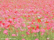 backnumber☁️歌詞画の画像(ピンクpinkに関連した画像)