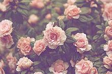 花の画像(おしゃれ 素材に関連した画像)