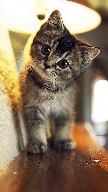 猫  保存はいいねの画像(プリ画像)
