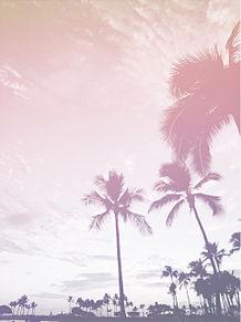 palm trees プリ画像
