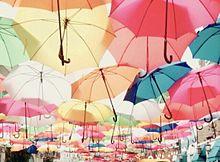 傘 プリ画像