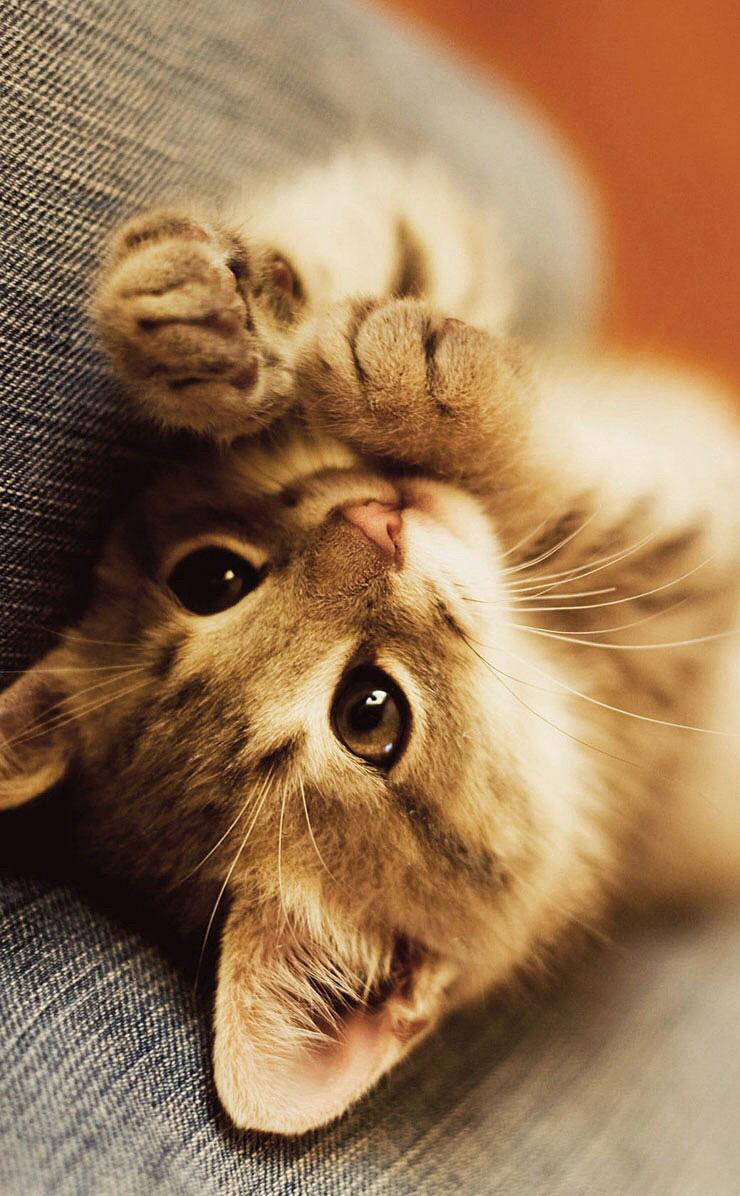 猫 スマホ壁紙 55106842 完全無料画像検索のプリ画像 Bygmo