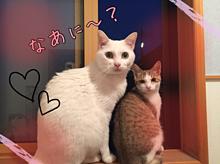 猫の一瞬を見逃さず撮った1枚です!二人で仲良く外を見ています♡の画像(仲良くに関連した画像)