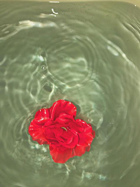 薔薇バラRoseの画像(プリ画像)