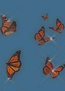 butterfly プリ画像