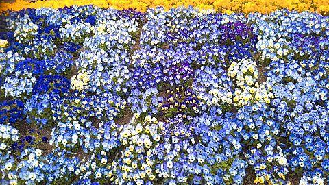 花🌸の画像(プリ画像)