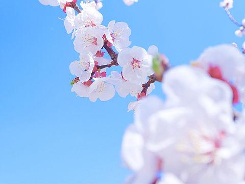 青い春の画像(プリ画像)