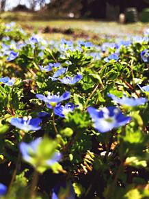 爽やかな春の画像(Springに関連した画像)