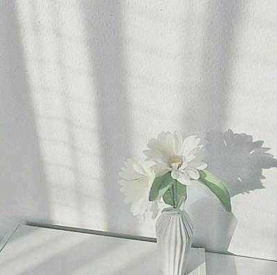 素材  雰囲気  白の画像(プリ画像)