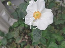家の前に咲いた花 プリ画像