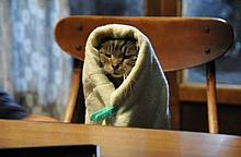 世界から猫が消えたならの画像(プリ画像)